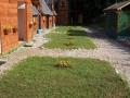 kolibe_3_20120625_1918378200