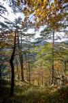 Zelengora - Sutjeska, BIH - October 2015.-1086-DSC_3209